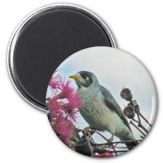 """""""Noisy Miner"""" bird magnet"""