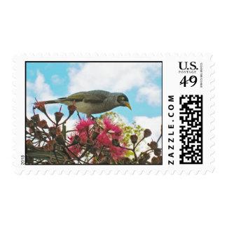 """Noisy Miner"" bird postage stamps"