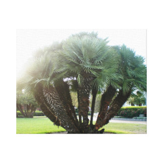 NOLA Palm Trees Canvas Print
