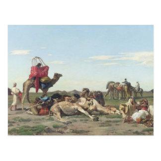 Nómadas en el desierto, 1861 postales