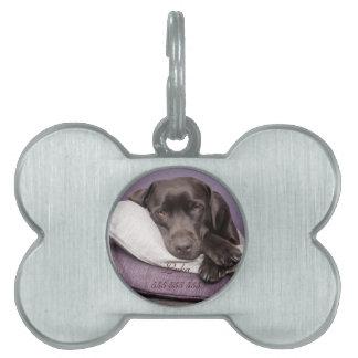 Nombre de encargo de Labrador y etiqueta de la ide Placa De Mascota