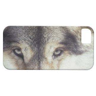 Nombre latino: Lupus de Canis Funda Para iPhone SE/5/5s