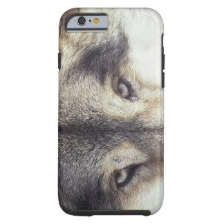 Nombre latino: Lupus de Canis Funda Resistente iPhone 6