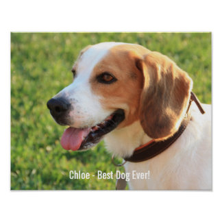 Nombre personalizado de la foto del perro del póster