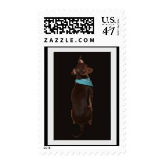 Nombre su franqueo sellos postales