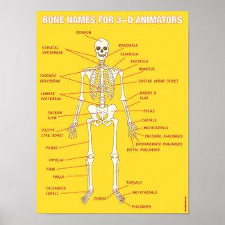 Nombres del hueso para los animadores tridimension póster