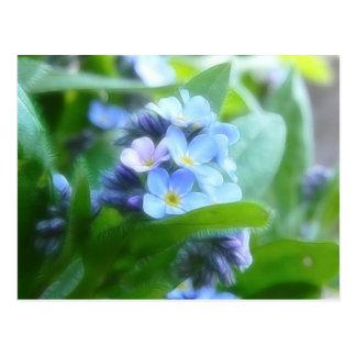 Nomeolvides azules frescas tarjeta postal