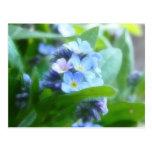 Nomeolvides azules frescas tarjetas postales