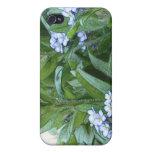 Nomeolvides en el jardín iPhone 4 protectores