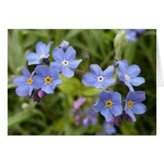 Nomeolvides, flor de estado de Alaska Felicitaciones