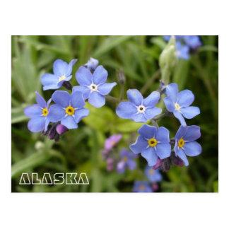 Nomeolvides, flor de estado de Alaska Tarjetas Postales