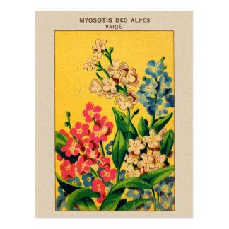 Nomeolvides francesas del arte de la semilla del tarjeta postal