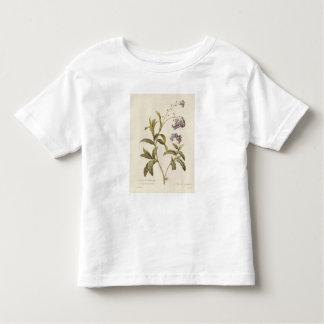 Nomeolvides Camisetas