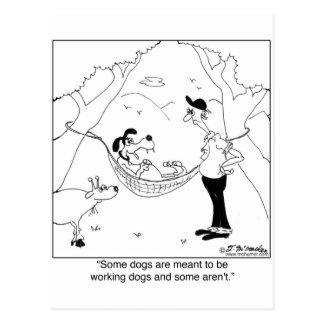 Non Working Herding Dog Postcard