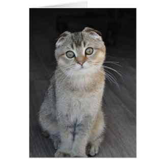 Noodles the Scottish Fold looking innocent Card