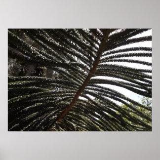 Norfolk Island Pine Poster