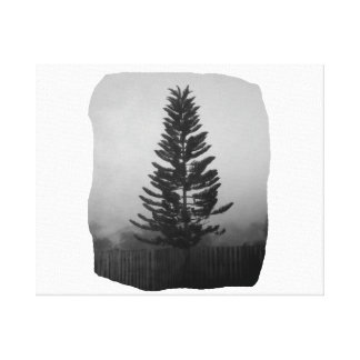 Norfolk Pine Black and White Picture Foggy Canvas Print
