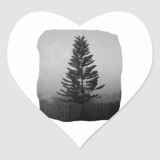 Norfolk Pine Black and White Picture Foggy Stickers