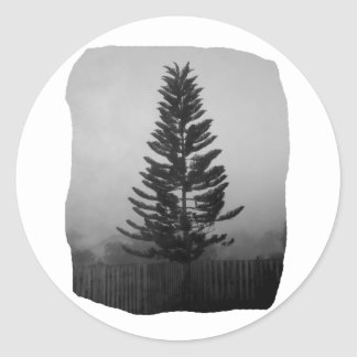 Norfolk Pine Black and White Picture Foggy Sticker