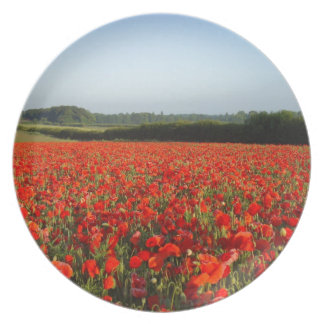 NORFOLK  RED POPPIES PLATES