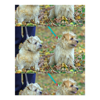 Norfolk-terrier-dogs