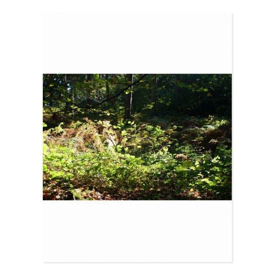 Norfolk Woodlands Postcard