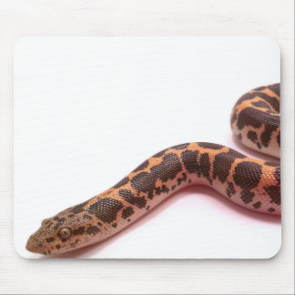 Normal Kenyan sand boa mousepad