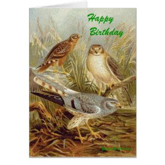 normal_Montagus_Harrier, Happy     Birthday , B... Card