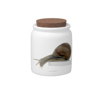 Normalsnail Candy Jars
