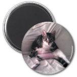 Normando el gato imán de nevera