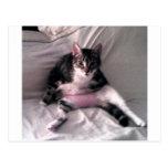 Normando el gato postales
