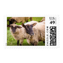 Normandy Sheep | France Postage
