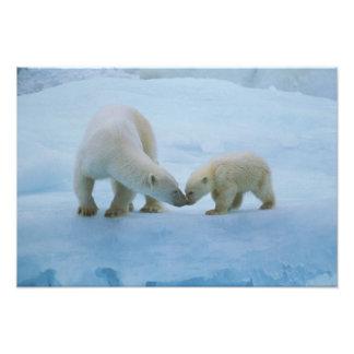 Norteamérica, ártico canadiense. Oso polar y Fotografía