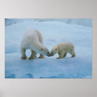 Norteamérica ártico canadiense Oso polar y Poster