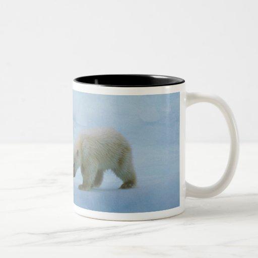 Norteamérica, ártico canadiense. Oso polar y Taza De Café