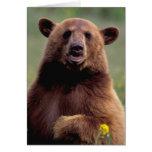 Norteamérica, California, oso negro del canela Tarjeta De Felicitación