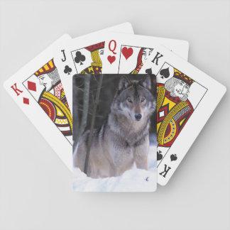 Norteamérica, Canadá, Canadá del este, lobo gris Baraja De Póquer