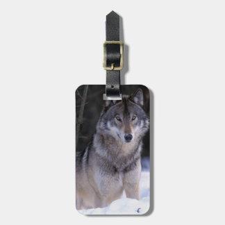 Norteamérica, Canadá, Canadá del este, lobo gris Etiquetas Para Maletas