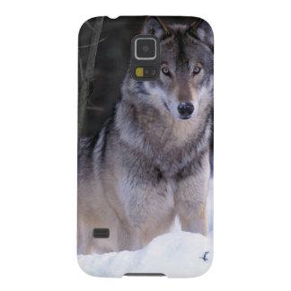 Norteamérica, Canadá, Canadá del este, lobo gris Carcasas Para Galaxy S5