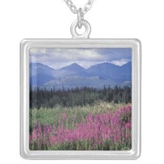 Norteamérica, Canadá, el Yukón. Floraciones del Collar Plateado
