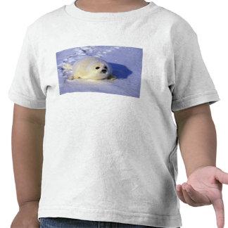 Norteamérica, Canadá, golfo de St. Lorenzo. 4 Camisetas