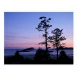 Norteamérica, Canadá, isla de Vancouver, árboles Postales