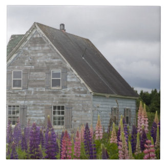 Norteamérica, Canadá, Isla del Principe Eduardo, Azulejo Cuadrado Grande
