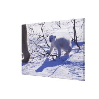 Norteamérica Canadá Manitoba Churchill 10 Impresión De Lienzo