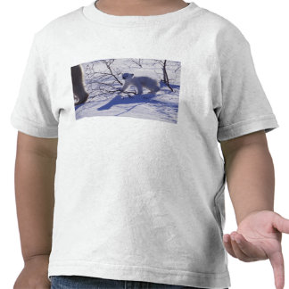 Norteamérica, Canadá, Manitoba, Churchill. 11 Camiseta