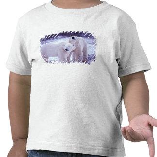 Norteamérica, Canadá, Manitoba, Churchill. 2 Camiseta