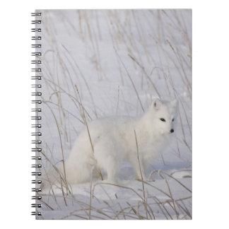 Norteamérica, Canadá, Manitoba, Churchill. 4 Notebook