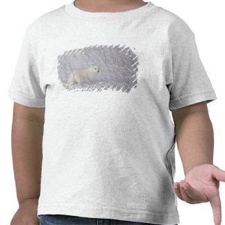 Norteamérica, Canadá, Manitoba, Churchill. 4 Camisetas