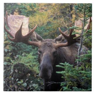 Norteamérica, Canadá, Nueva Escocia, bretón del ca Azulejos