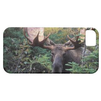 Norteamérica, Canadá, Nueva Escocia, bretón del ca iPhone 5 Case-Mate Carcasa